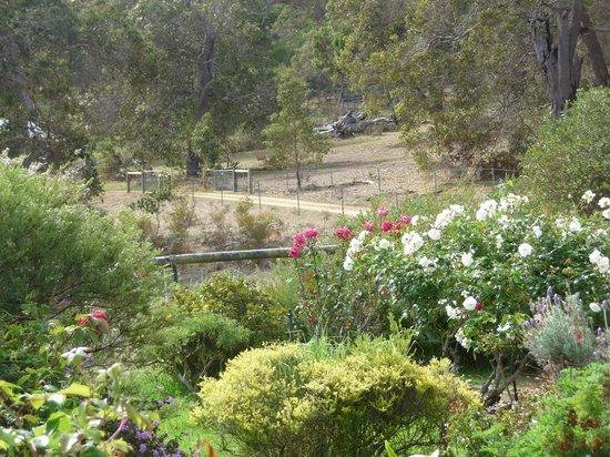 Cape Howe Cottages: Garden