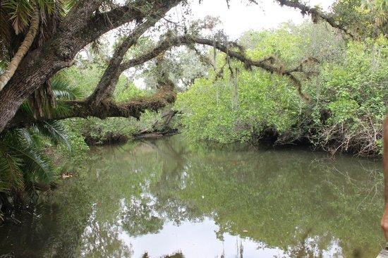 Koreshan State Historic Site: Scenic Estero river