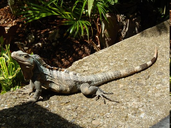 Hotel Costa Verde: Another guest