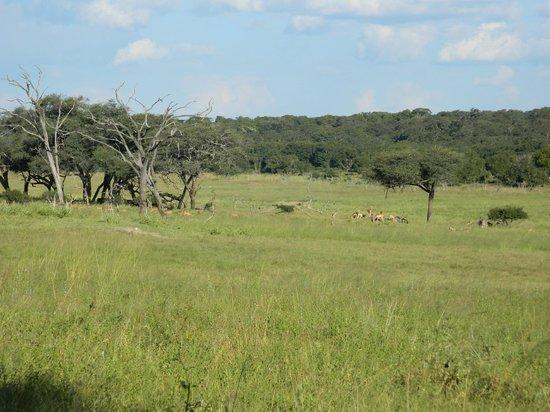 Hwange Safari Lodge: some game on the way to waterhole