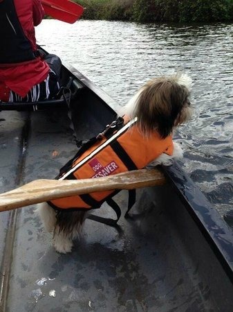 Saddles & Paddles Exeter Ltd: Dogs are welcome in our canoes too!