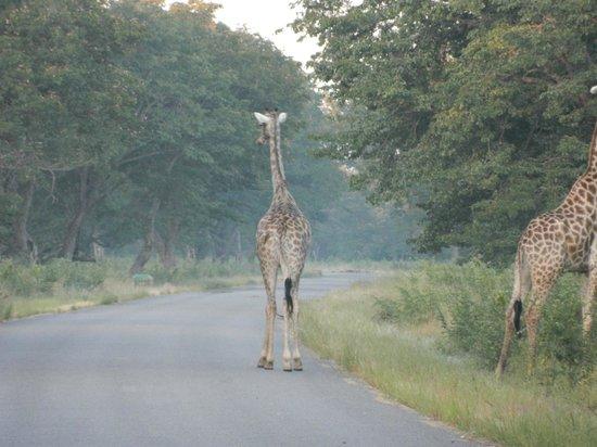 Hwange Safari Lodge: early morning game drive