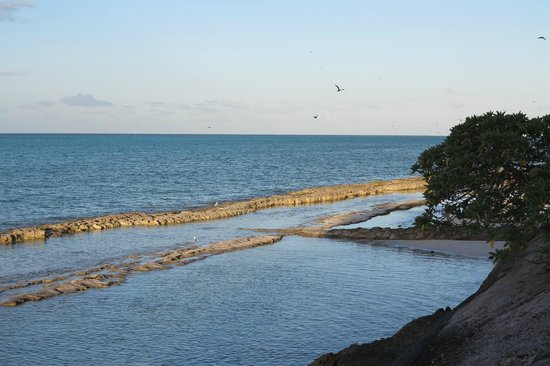 Heron Island Resort: View from the pool