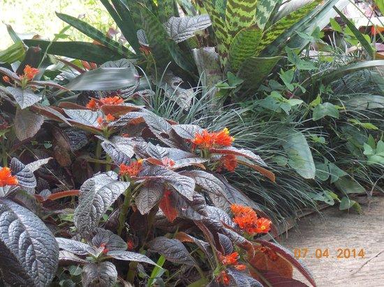 Hunte's Gardens : In the Garden
