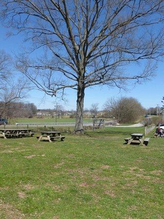 Woodside Farm Creamery : Woodside Farm tables, trees & view