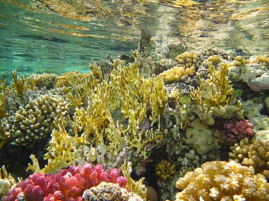 Sharks Bay Umbi Diving Village : reef in front