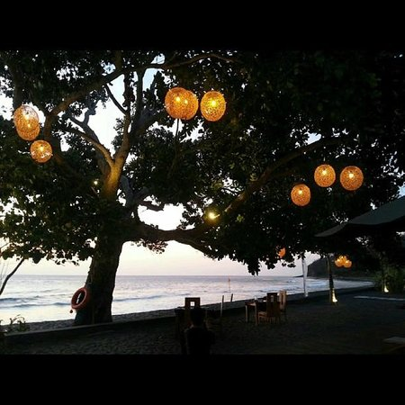Living Asia Resort and Spa Lombok : The beautiful tree in front of the resort