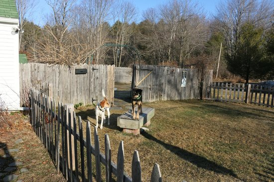Hounds Tooth Inn : Hounds at play.