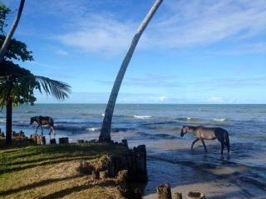 Hotel Vila dos Orixas: Vista do mar com maré alta e cavalos que ficam passeando por lá...