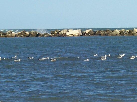 Bagno Corallo : vacanze all'isola dei gabbiani