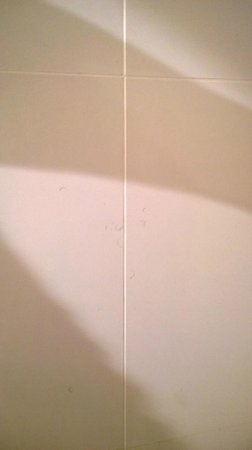 Q1 Resort and Spa: Hair on wall of shower