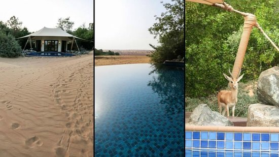 Al Maha, A Luxury Collection Desert Resort & Spa : Bedouin Villa 31 - Pool und Gazelle