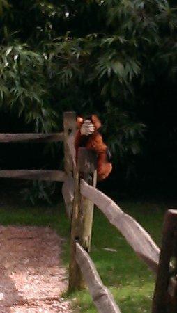ARTIS Amsterdam Royal Zoo: греемся