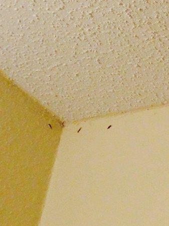 Days Inn Orlando Convention Center/International Drive: Bugs