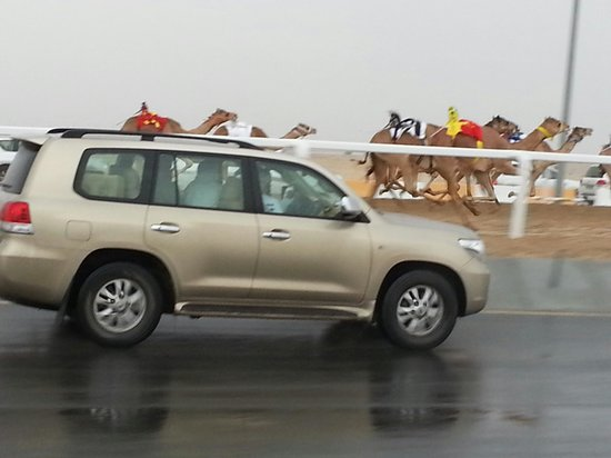 Ash-Shahaniyah, Qatar: Qatar Camel Racing