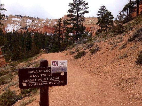 Navajo Trail : Начало пути