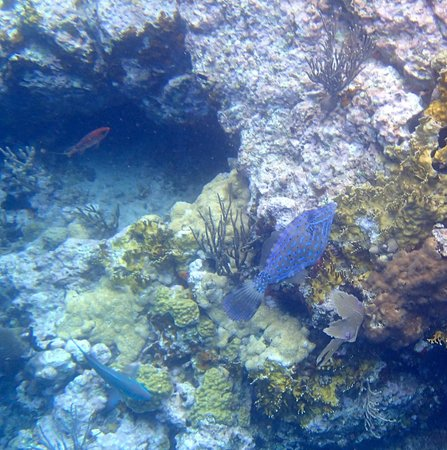 Filefish at the Indians