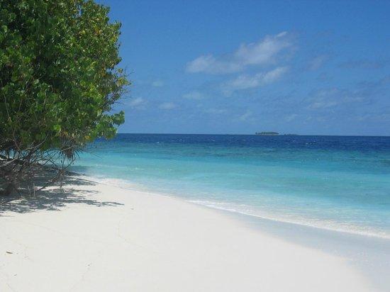Cruise-Maldives: desert island & snorkeling trip