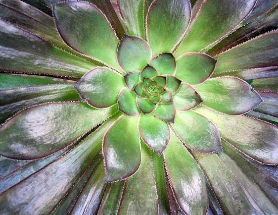 Ripley Castle and Gardens: Wonderful succulent!