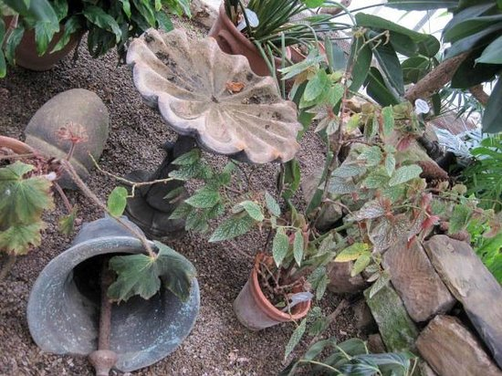 Ripley Castle and Gardens: You never know what you'll find in the greenhouse.....
