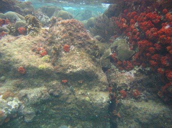 Ocean Encounters Diving: Snorkeling in Curacao