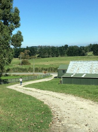 Gumtree Farmstay : Route to feed the lambs