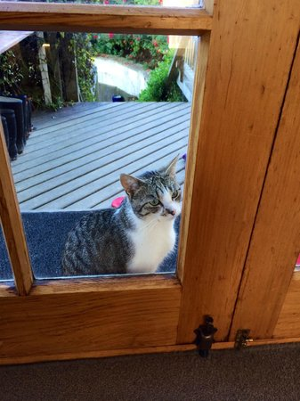 Gumtree Farmstay : I want to come in... open the door now!
