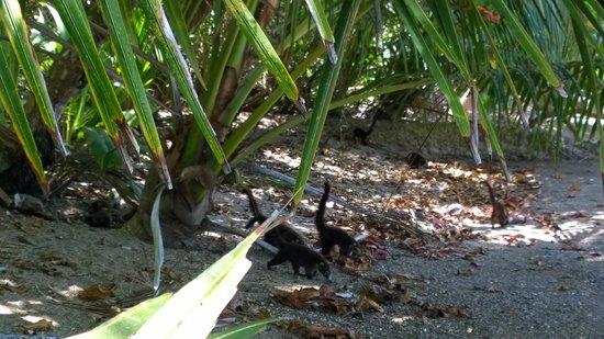 TikiVillas Rainforest Lodge & Spa : Kuwati's at Corcovado National Park