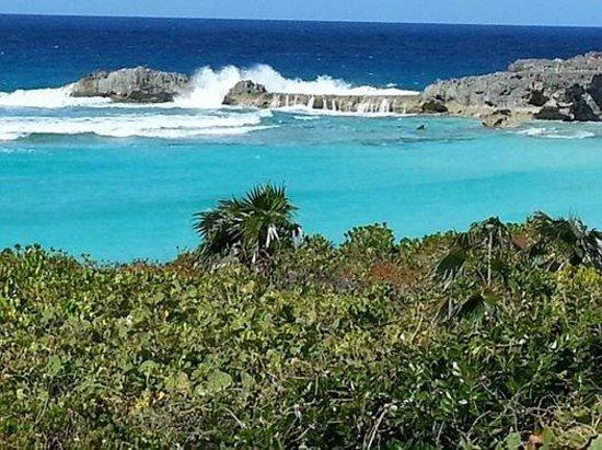 Blue Horizon Resort: View of dragon cay at high tide