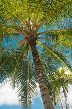 Regent Apartments Barbados: Garden