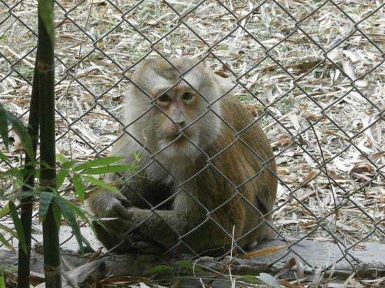 Dusky Langur - Picture of Wildlife Friends of Thailand ...