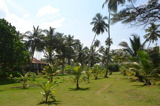 Kosgoda Beach Resort Tripadvisor
