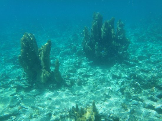 Sandals South Coast: snorkelling