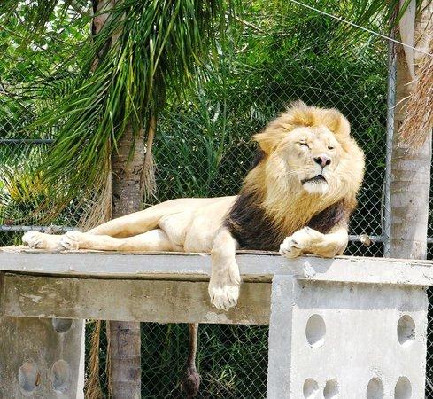 Big Cat Habitat and Gulf Coast Sanctuary: No words needed