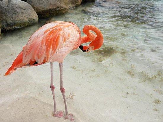 Renaissance Aruba Resort & Casino : Island
