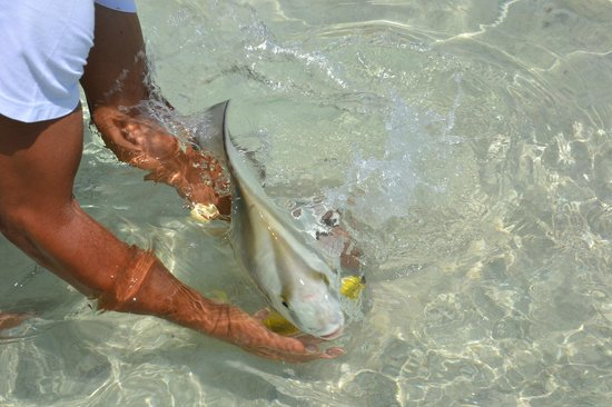 Sisters Islands Private: les poissons sont dociles !