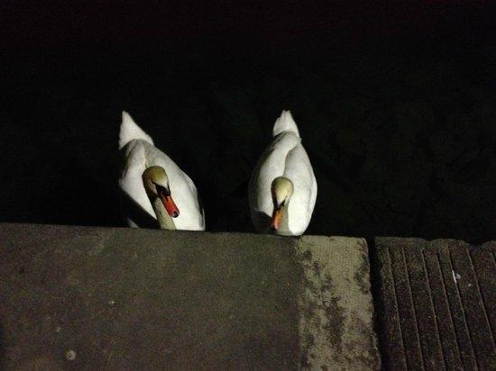 Hotel Kipling - Manotel Geneva: Our walk at night