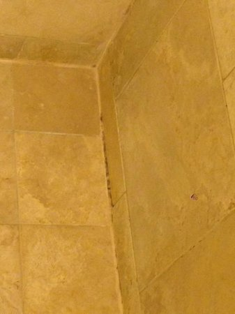 JW Marriott Phoenix Desert Ridge Resort & Spa : moldy / mildewy shower
