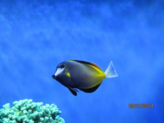 Monterey Bay Aquarium: Amazing colours...