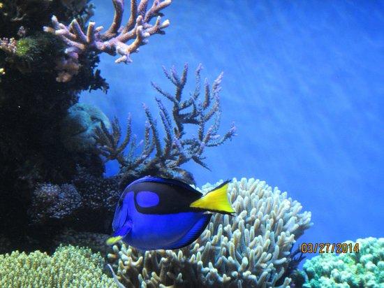 Monterey Bay Aquarium: Beautiful creautures...