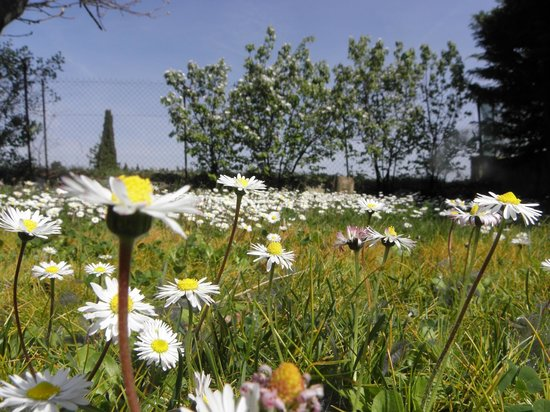 Bastide lou Pantail Chambres d'hôtes Fleurs de Soleil : 2014- printemps à la bastide