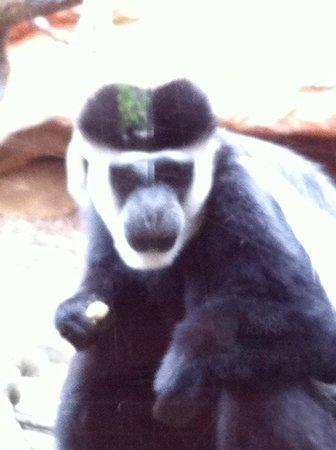 Bioparc Fuengirola: monkey