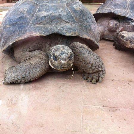 Bioparc Fuengirola: tortoise