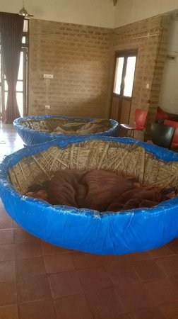 Incredible Bean Bag Lounge Boat Picture Of Our Native Village Alphanode Cool Chair Designs And Ideas Alphanodeonline