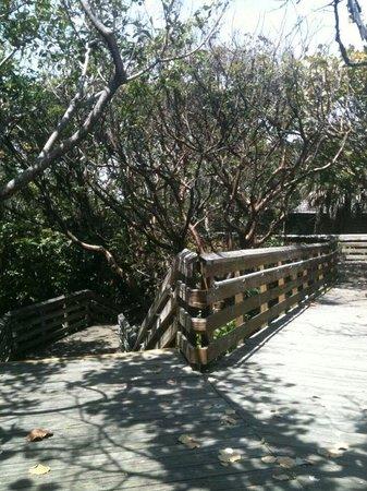 John D. MacArthur Beach State Park: walkway
