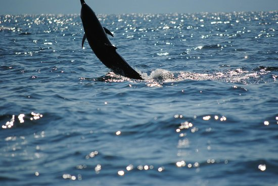 El Remanso Lodge: Dolphin watching