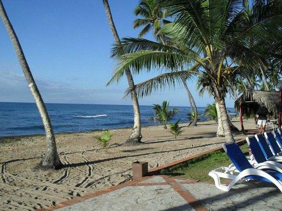 Albatros Club Resort: playa