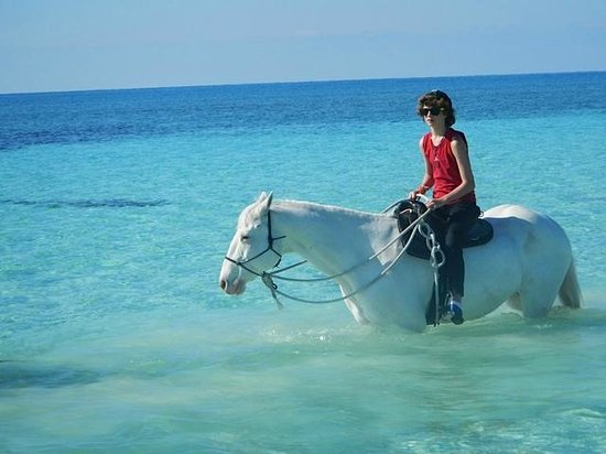 Island Seas Resort: Horseback riding Pinetree Stables