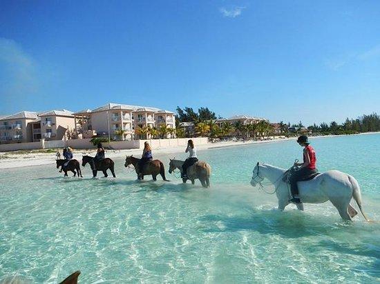 Island Seas Resort: Horseback riding Pinetree Stables near the resort