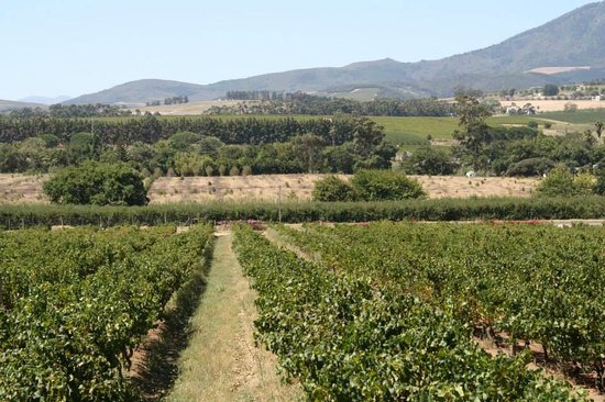 Beyerskloof Tasting Room: View of the vineyards from the restaurant